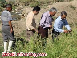 دو خاکی - انجام کیل گیری از مزارع برنج برتر شهرستان خداآفرین + تصاویر