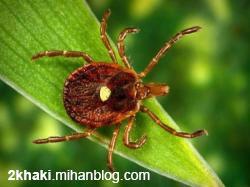 دو خاکی - حشرهای که با نیش زدنش شما را گیاه خوار میکند